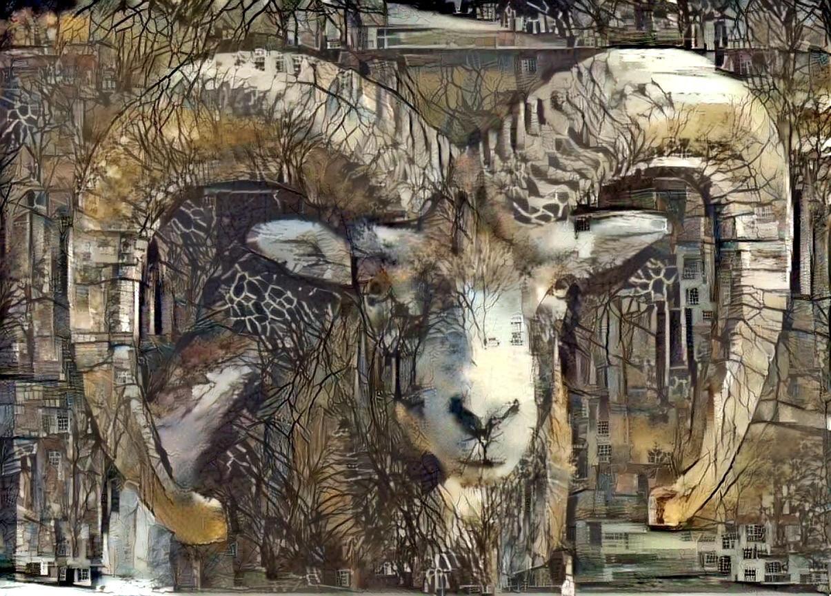 Big horn sheep _5502