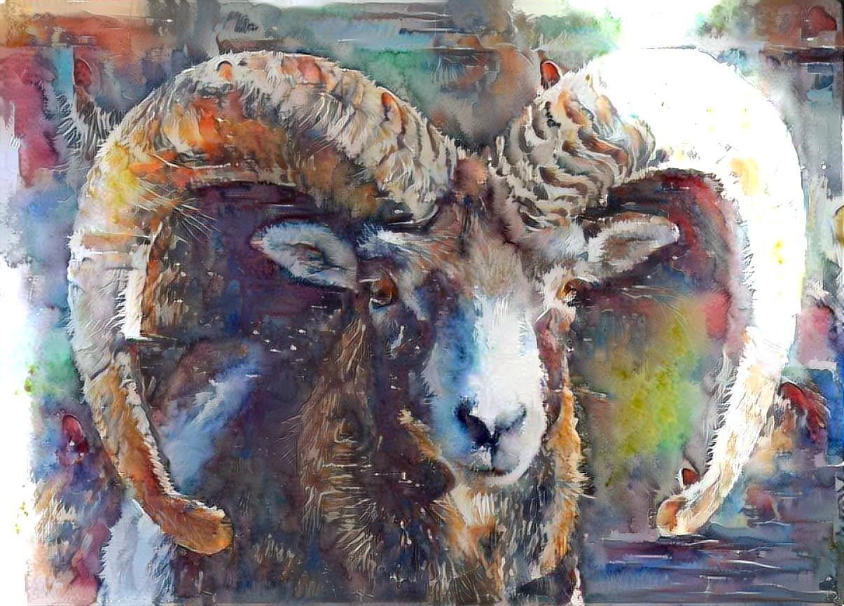 Big horn sheep _5503