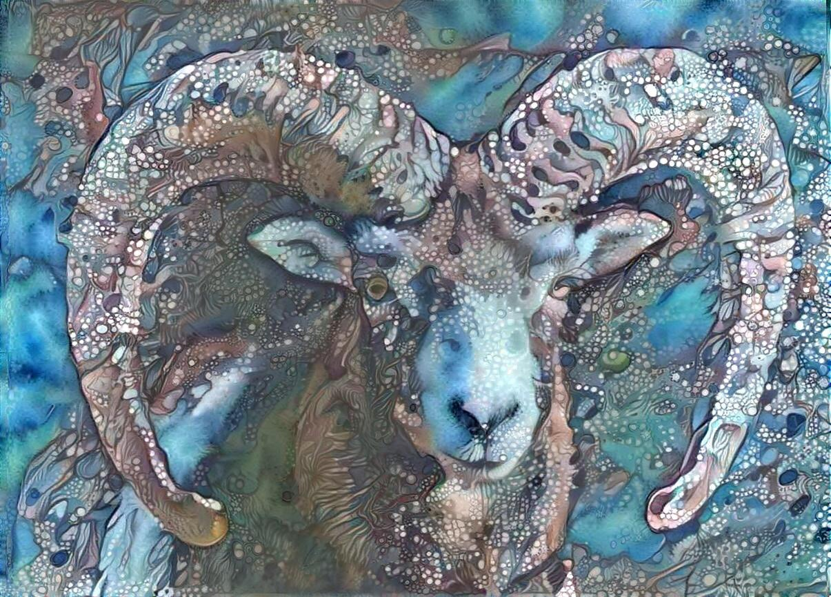 Big horn sheep _5504
