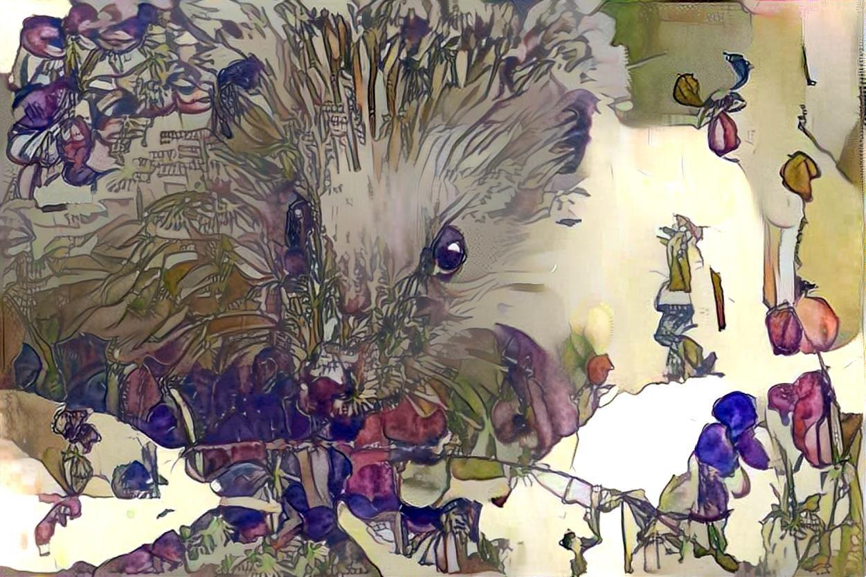 Hedgehog _5543