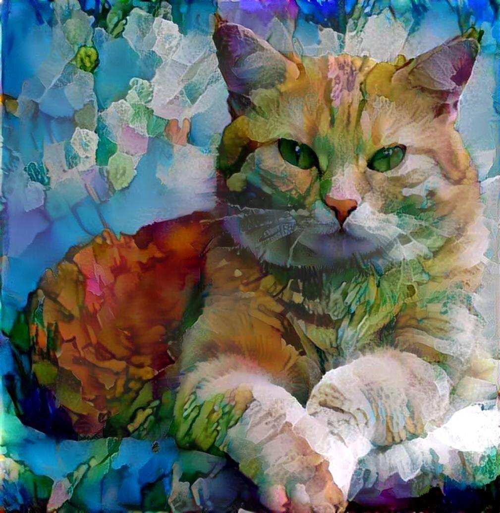 Cat_5544