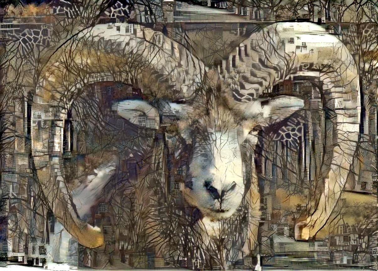 Big horn sheep_5545
