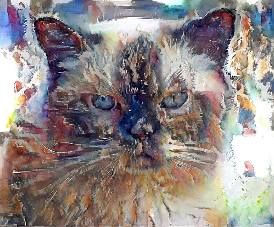 Cat_5571