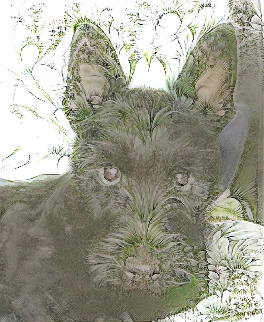 Dog_5591