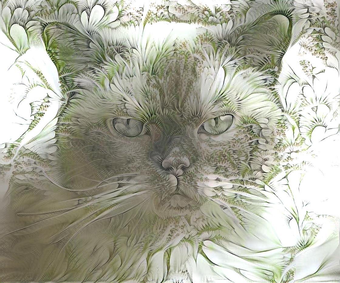Cat_5595