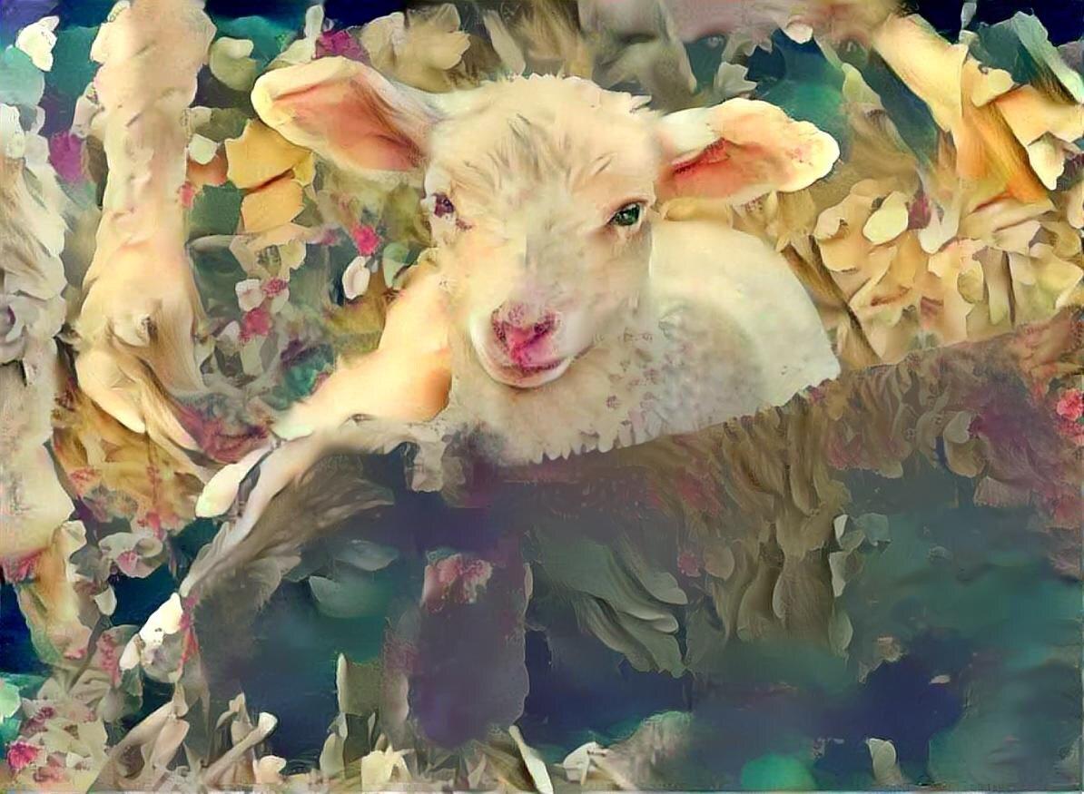 Sheep_5658