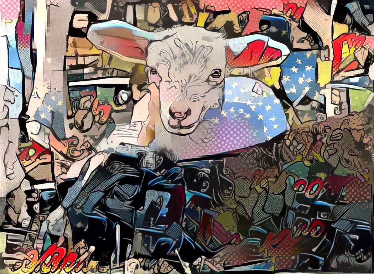 Sheep_5660