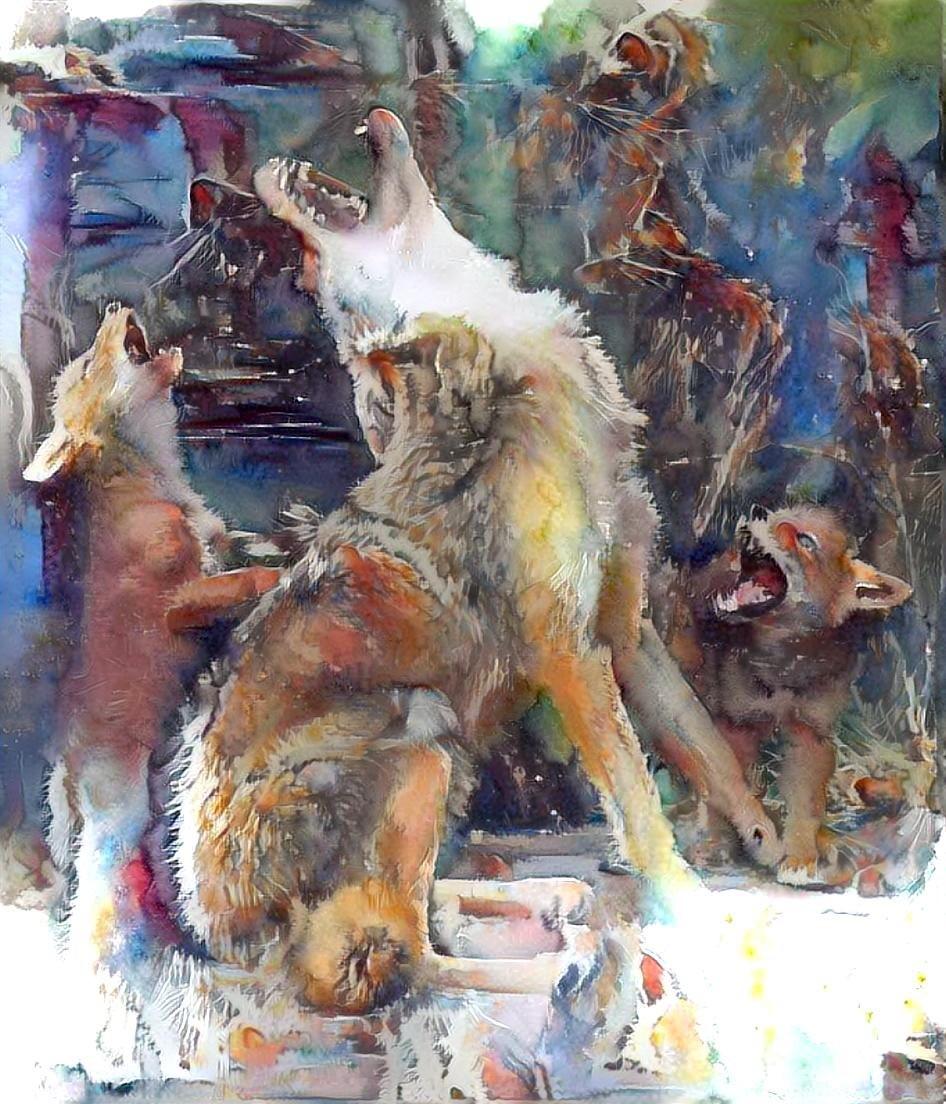 Wolf_5757