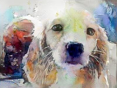Dog_5773
