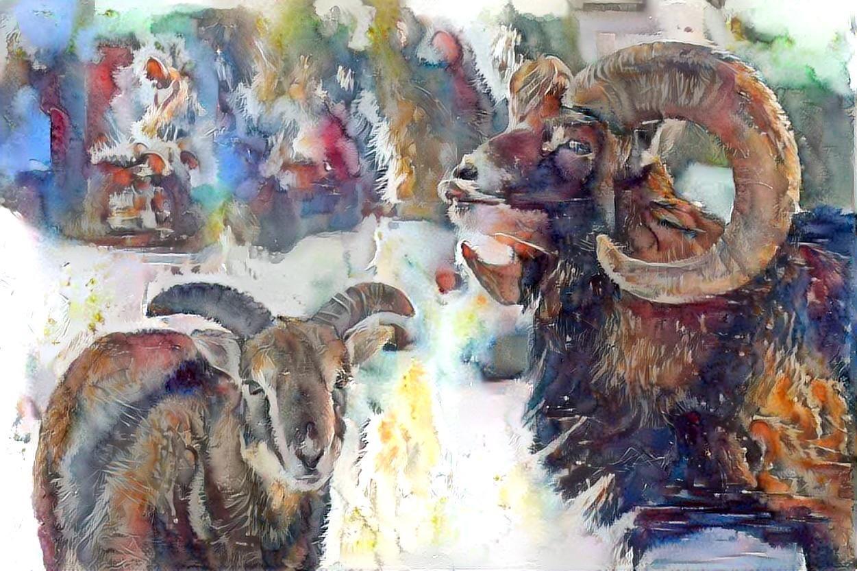 Big horn sheep _5813
