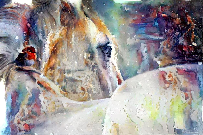 Horse_5814