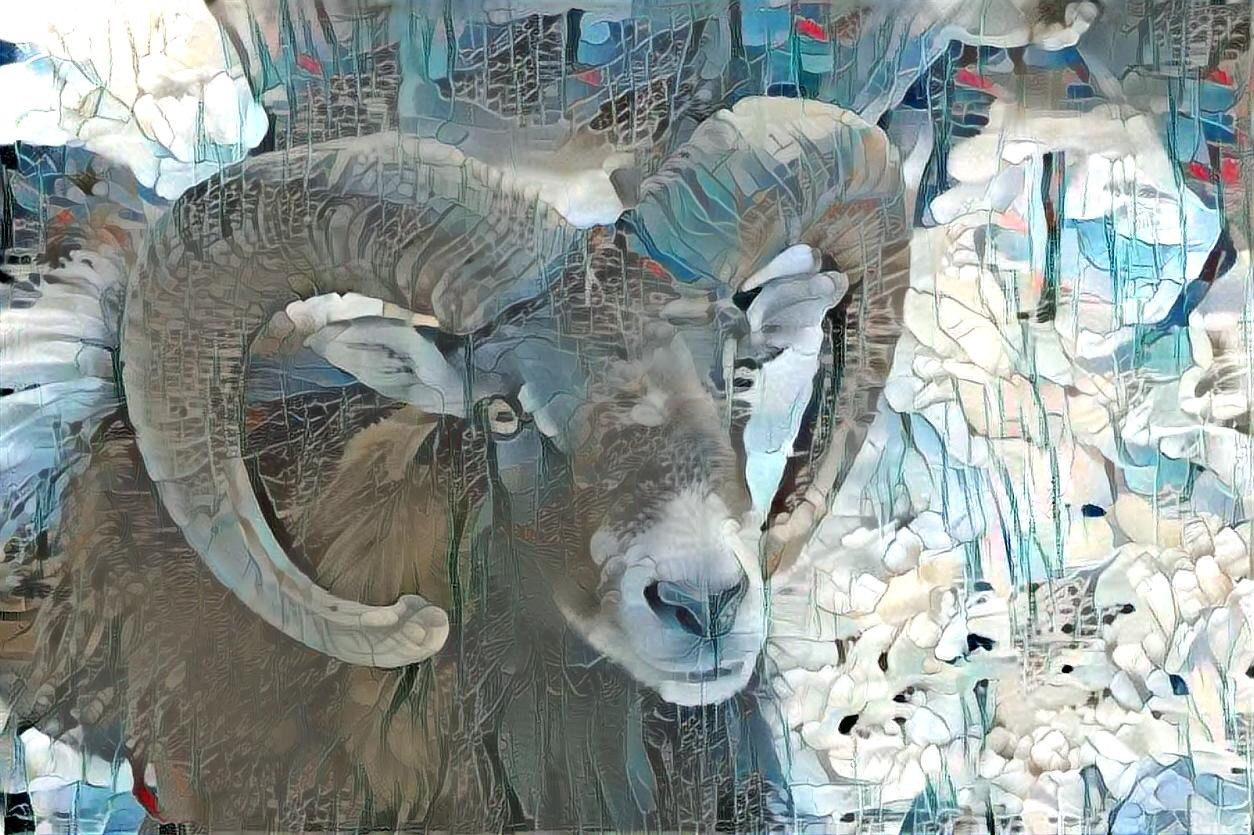 Big horn sheep _5831