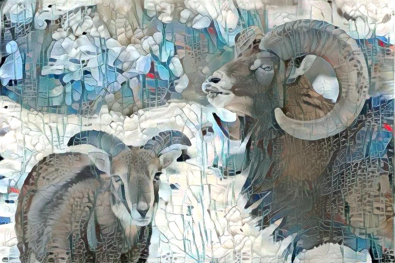 Big horn sheep_5832