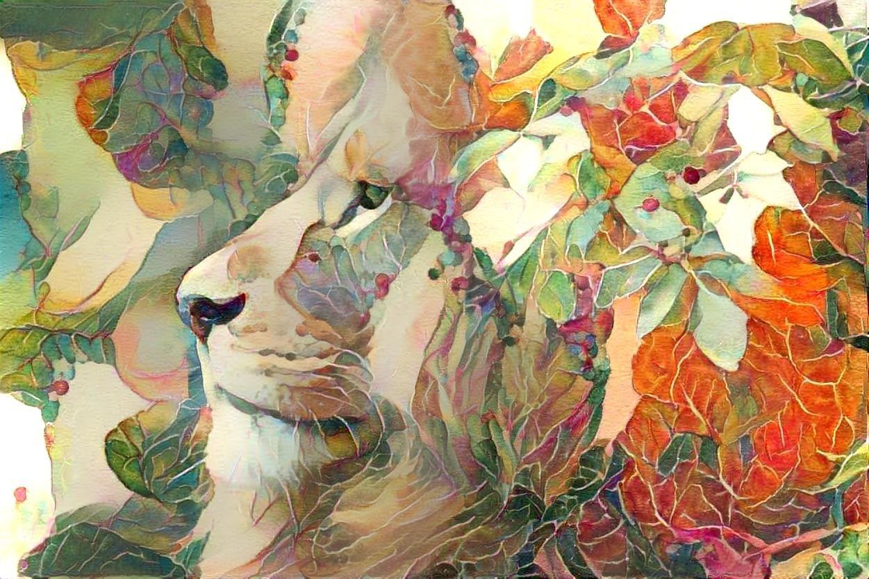 Lion_5926