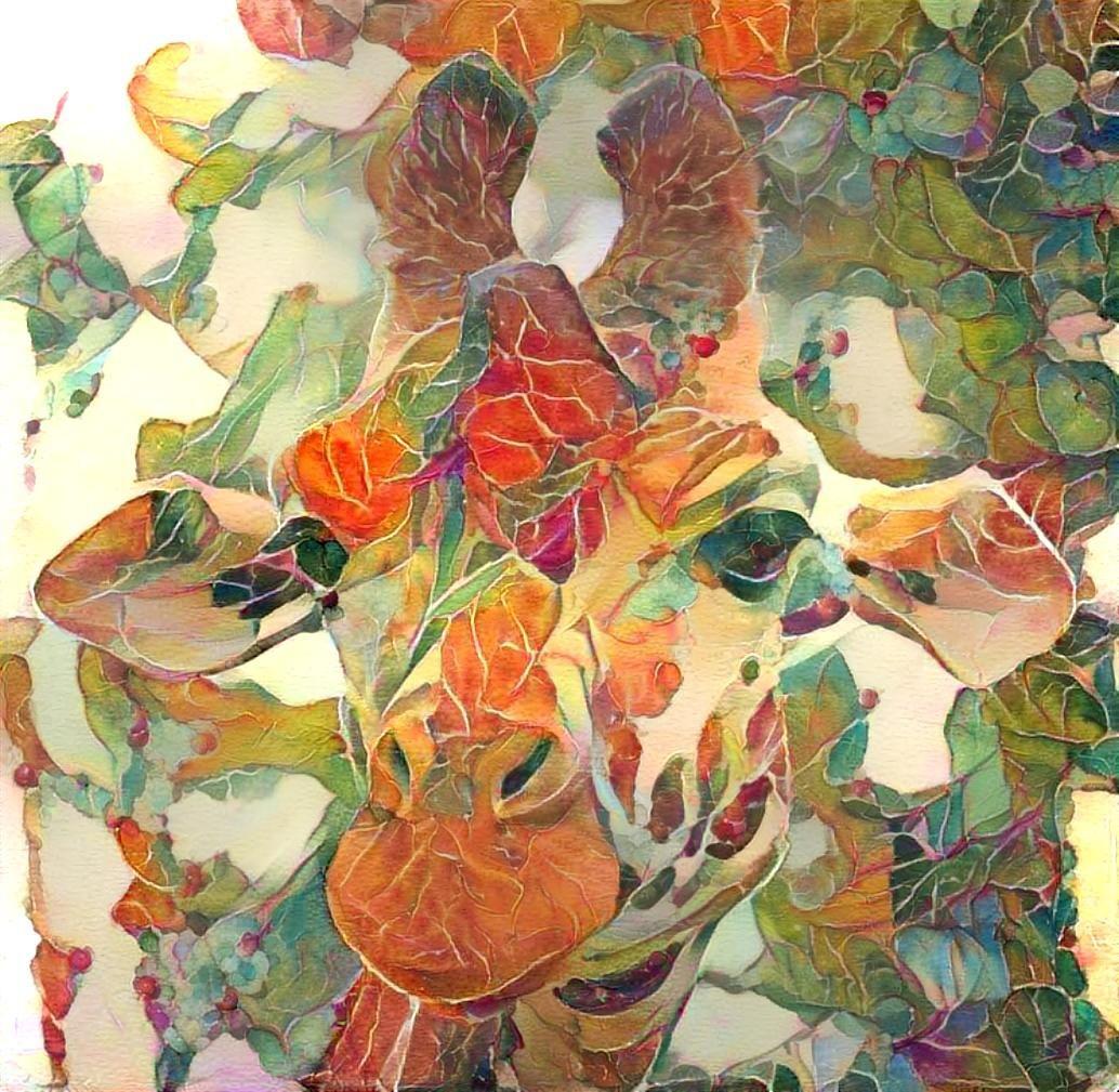 Giraffe _5947
