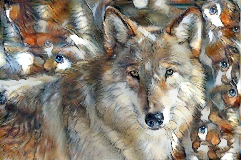 Wolf_5961