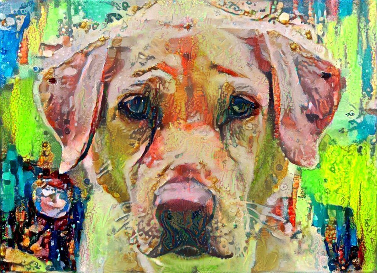 Dog_5993