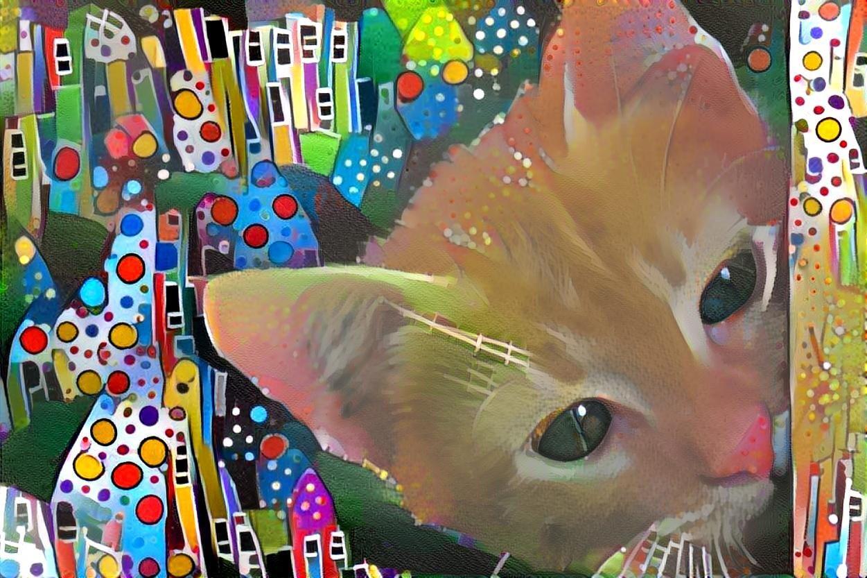 Cat_6034