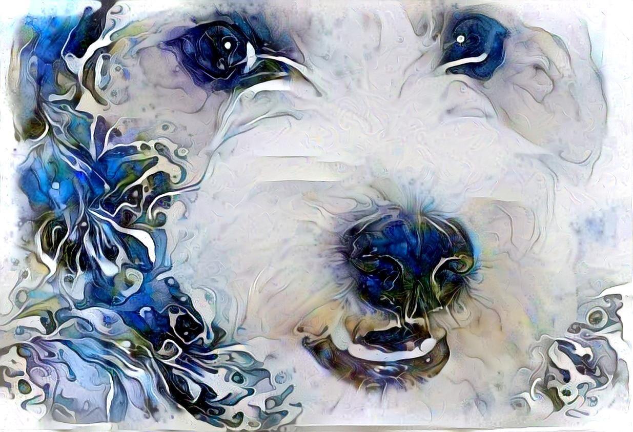 Dog_6086