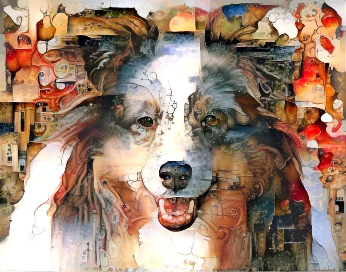 Dog_6088