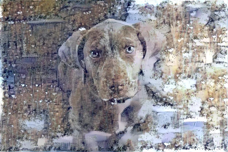 Dog_6092