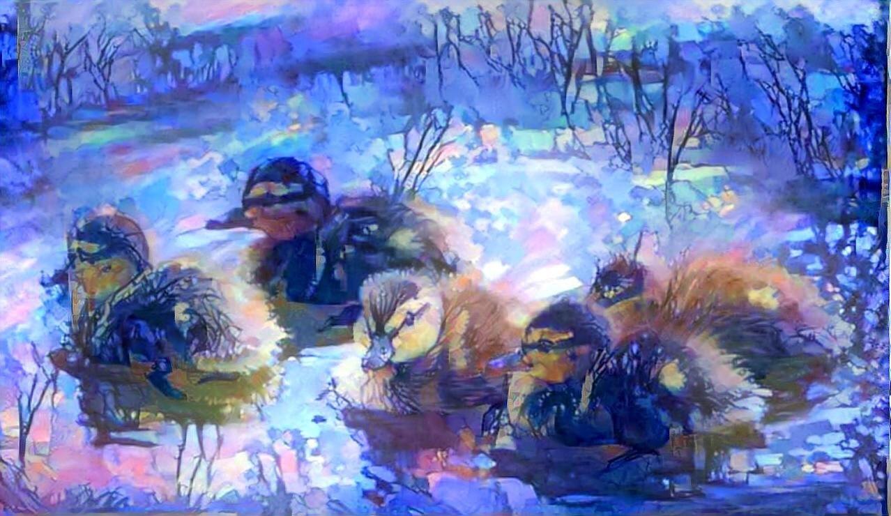 Ducks_6104