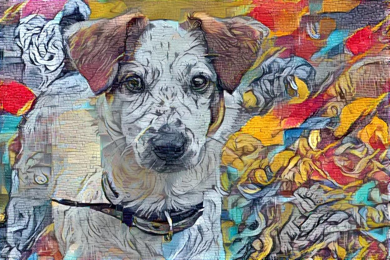 Dog_6138
