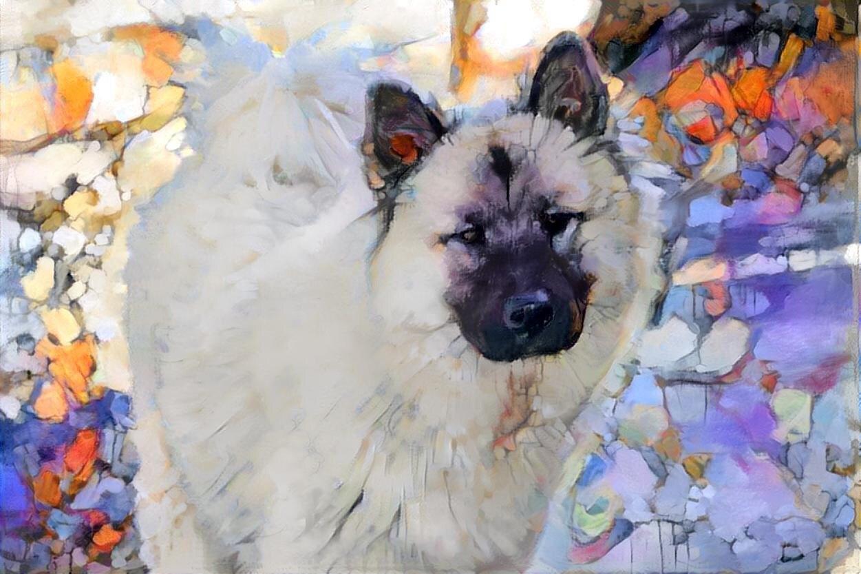 Dog_6142