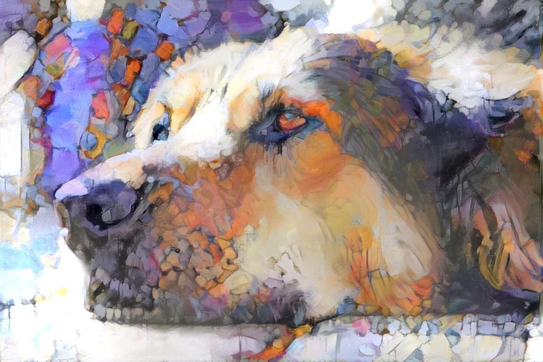 Dog_6144