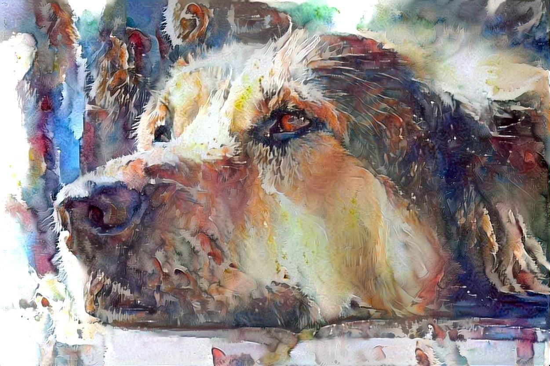 Dog_6152