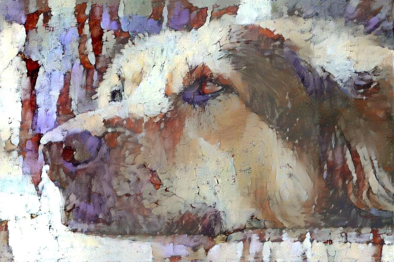 Dog_6202