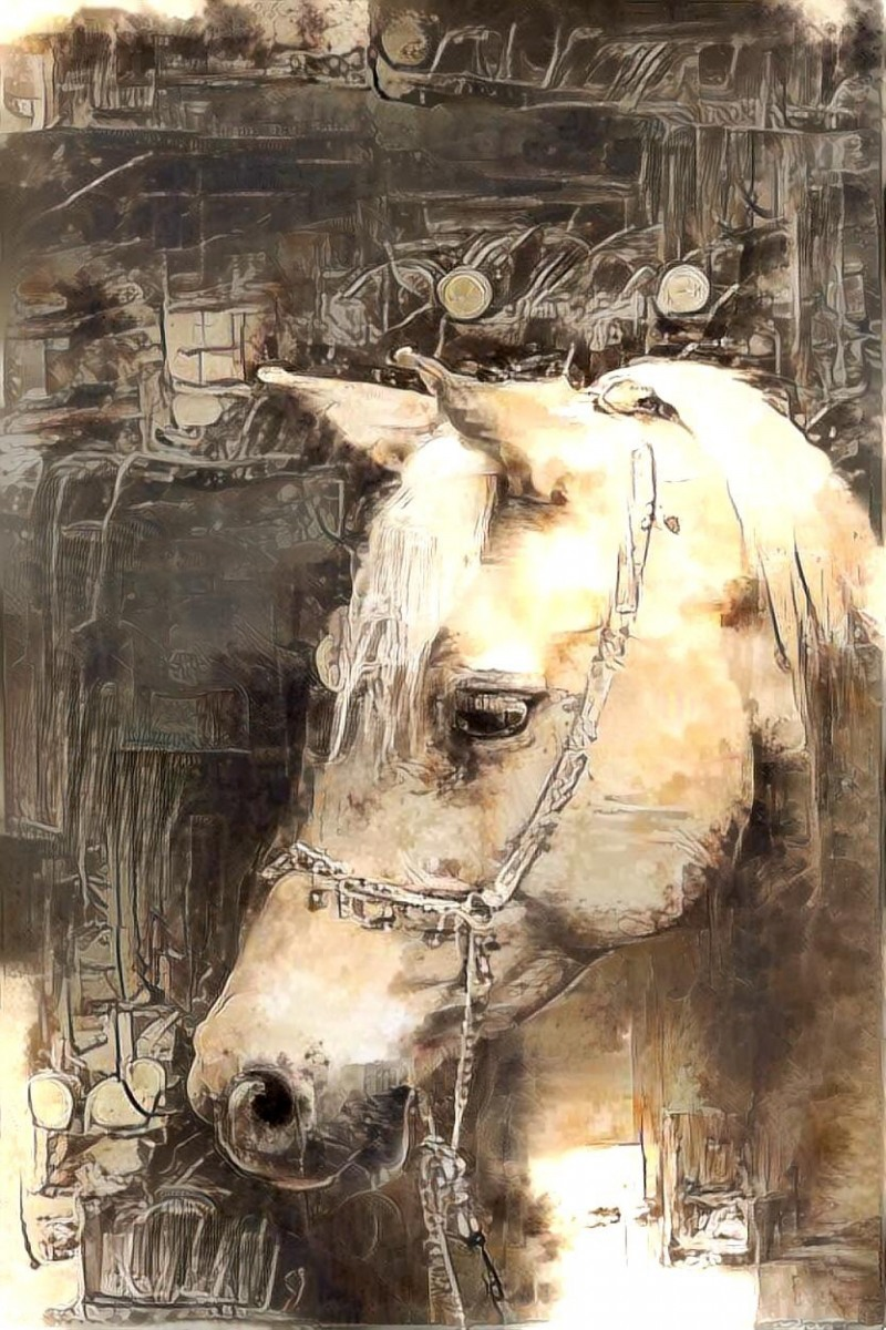 Horse_6216