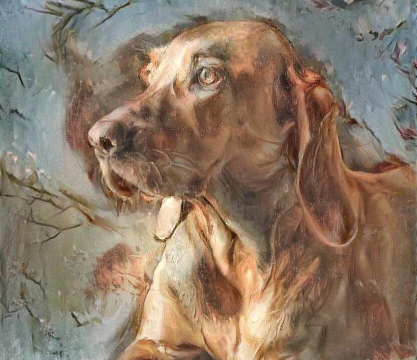 Dog_6220