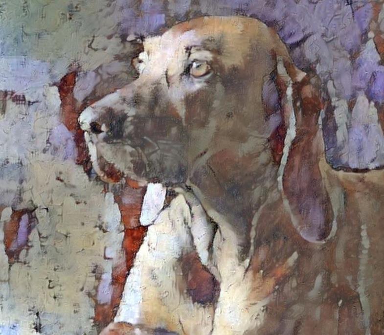 Dog_6221