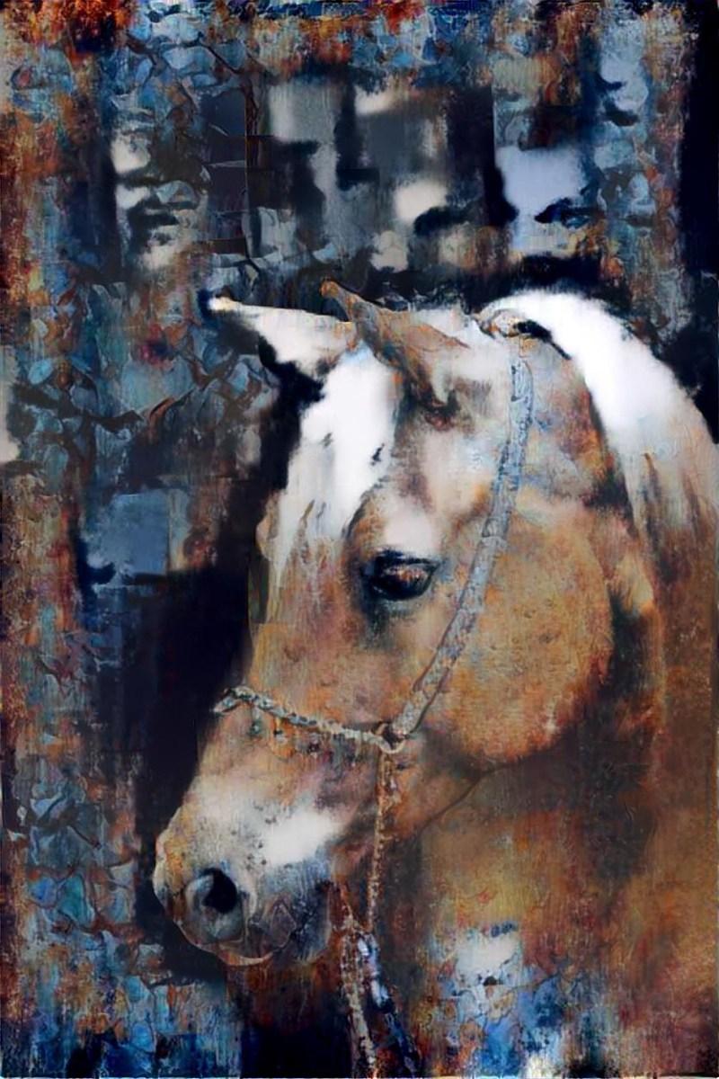 Horse_6226