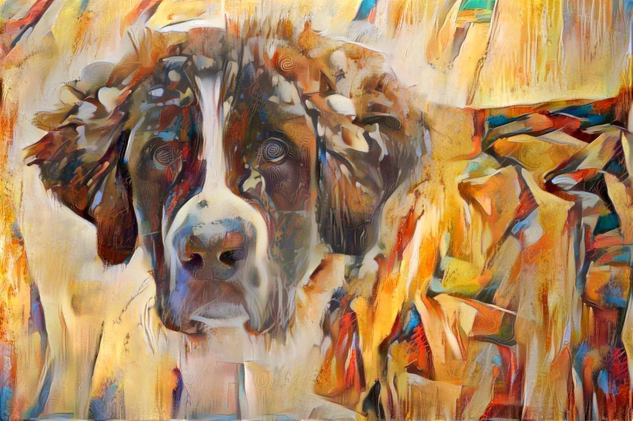 Dog_6260