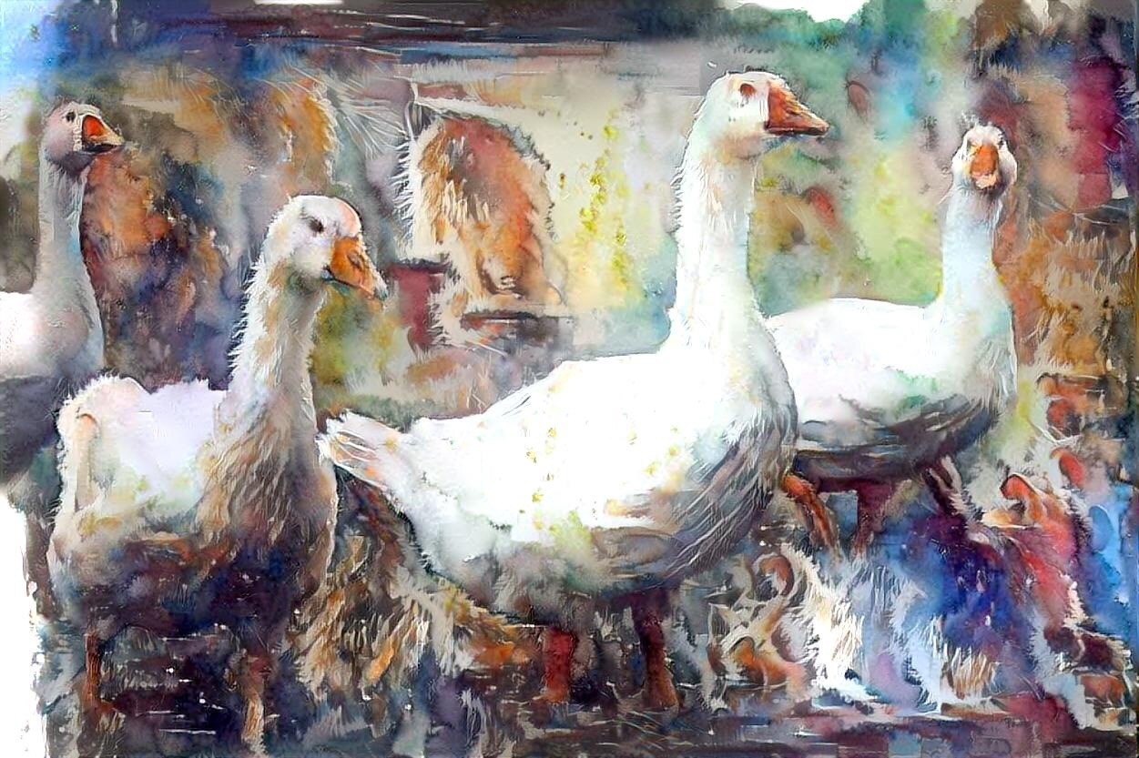 Geese_6284