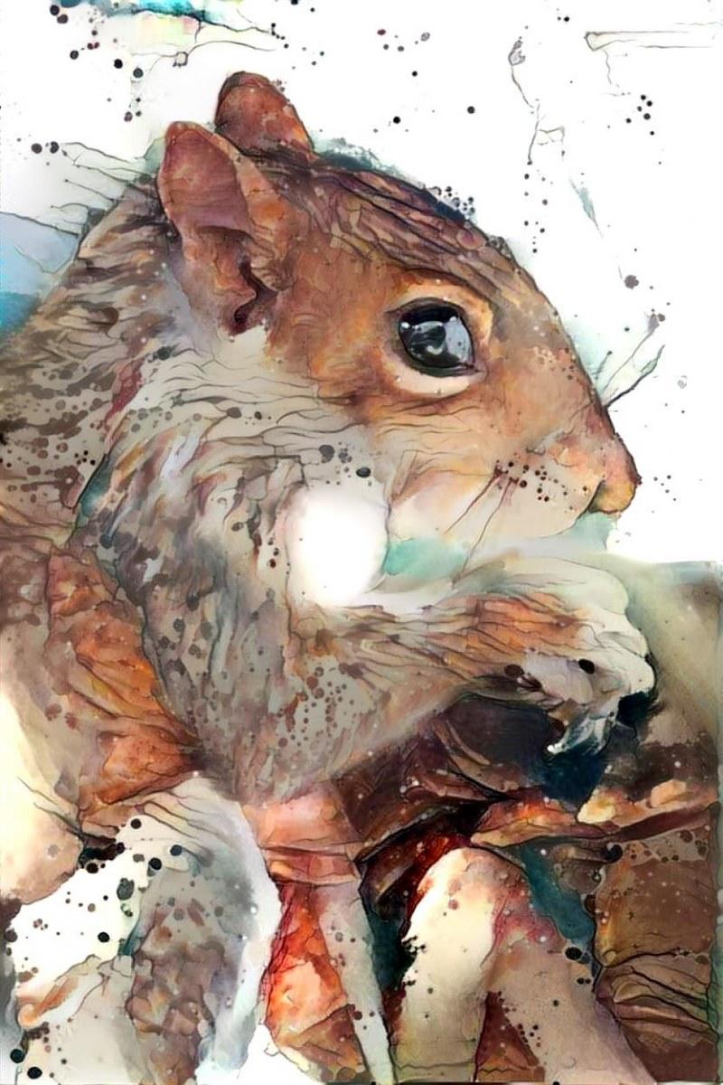 Squirrel _6286
