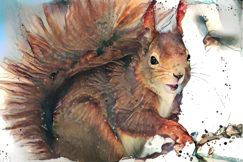 Squirrel _6327