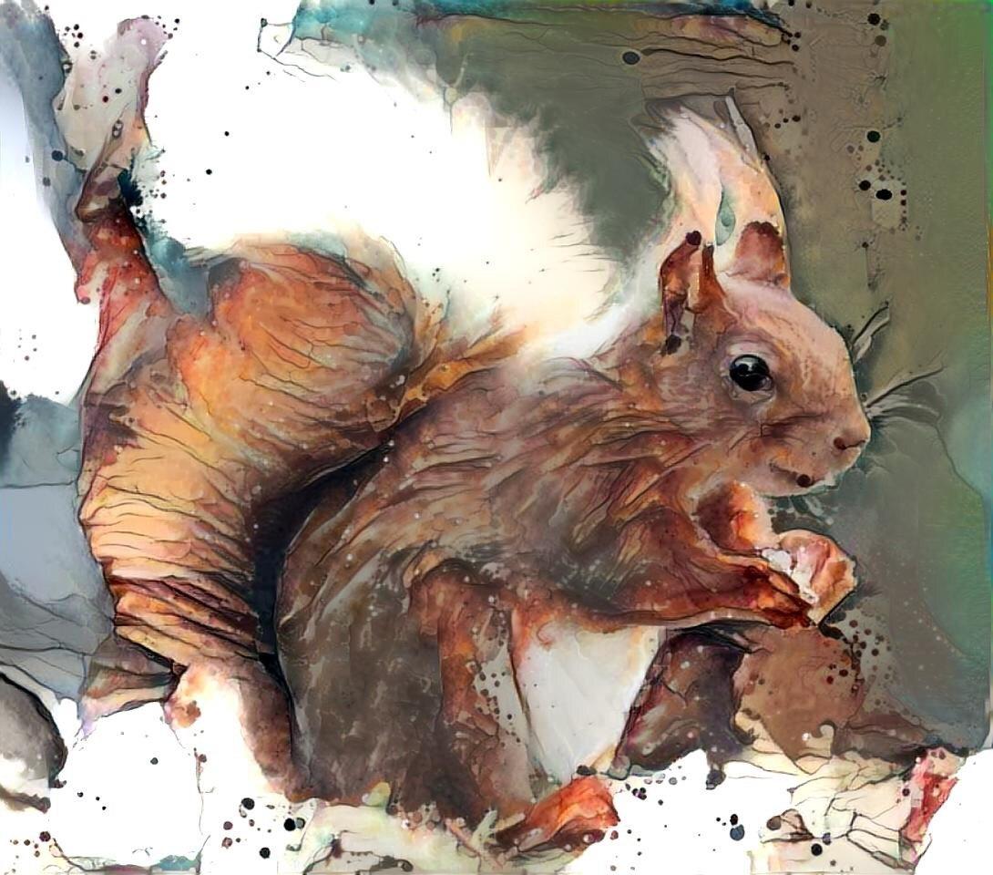 Squirrel _6329
