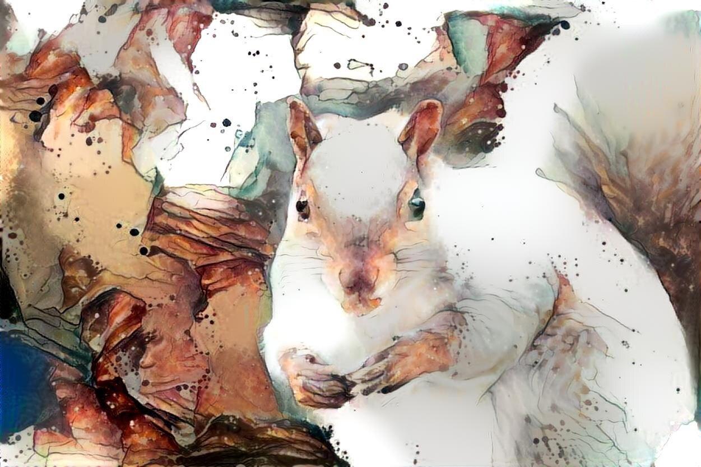 Squirrel _6341