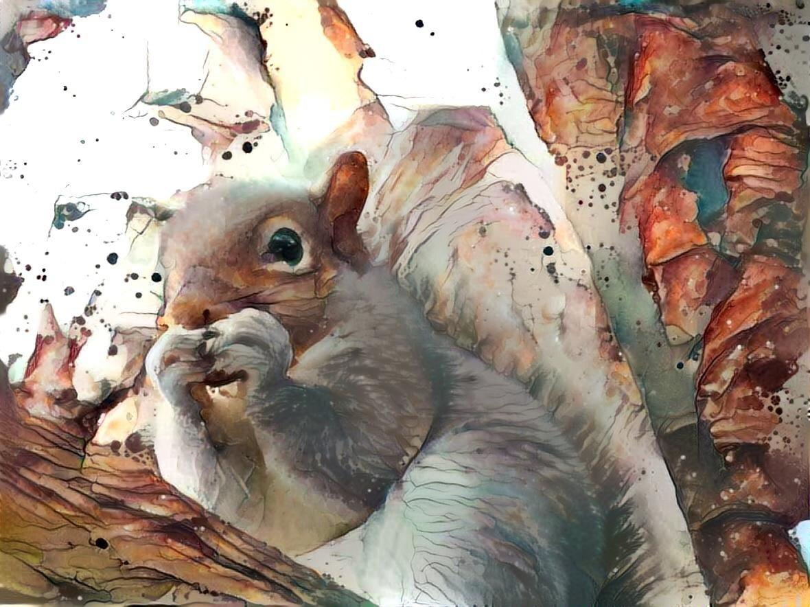 Squirrel _6342