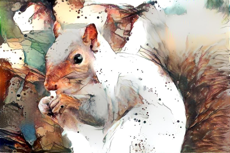 Squirrel _6343