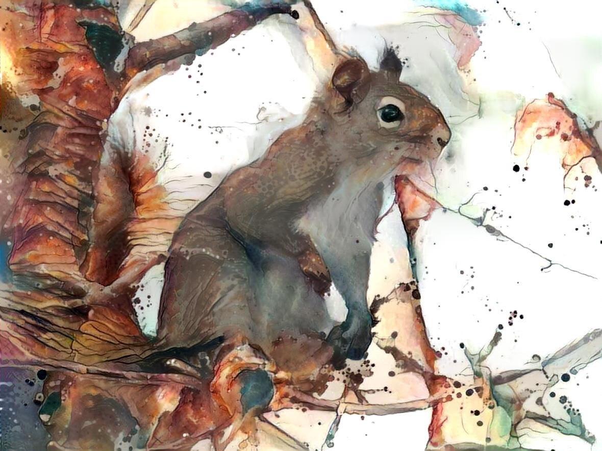 Squirrel _6344