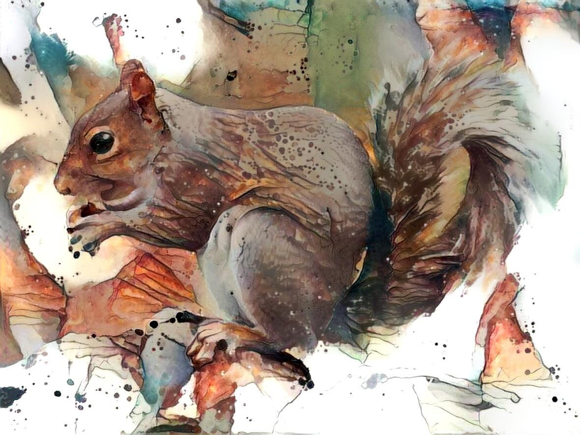 Squirrel _6354