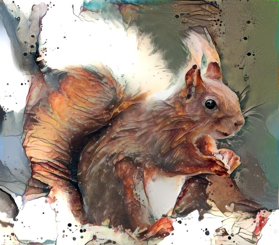 Squirrel _6355