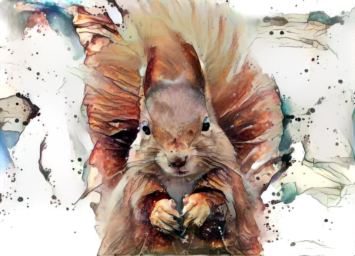 Squirrel _6357