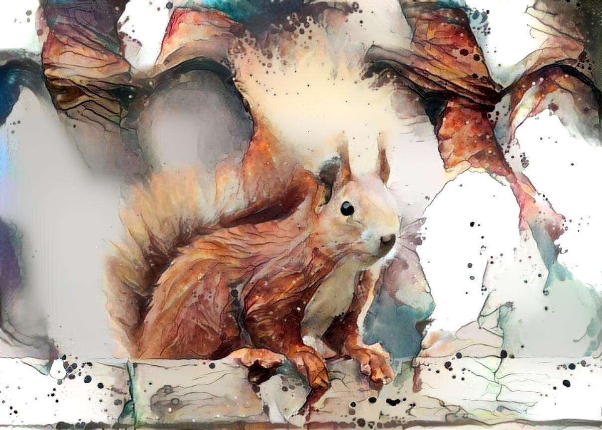 Squirrel _6363