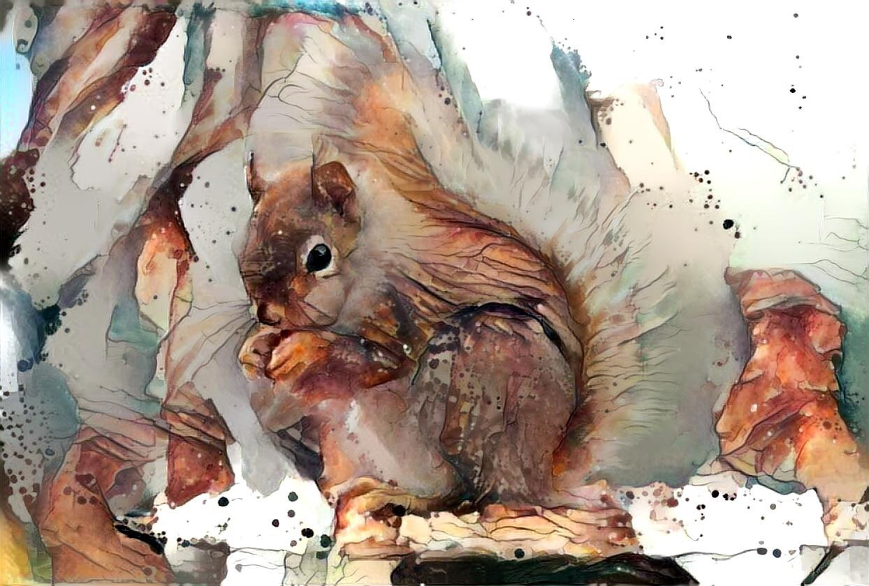 Squirrel _6364