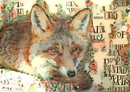 Coyote _6402